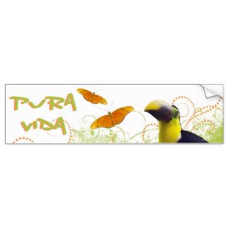 Toucan clipart costa rica #8
