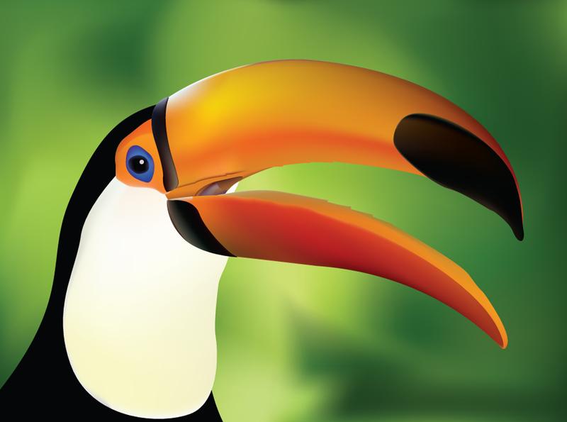 Toucan clipart hornbill #3