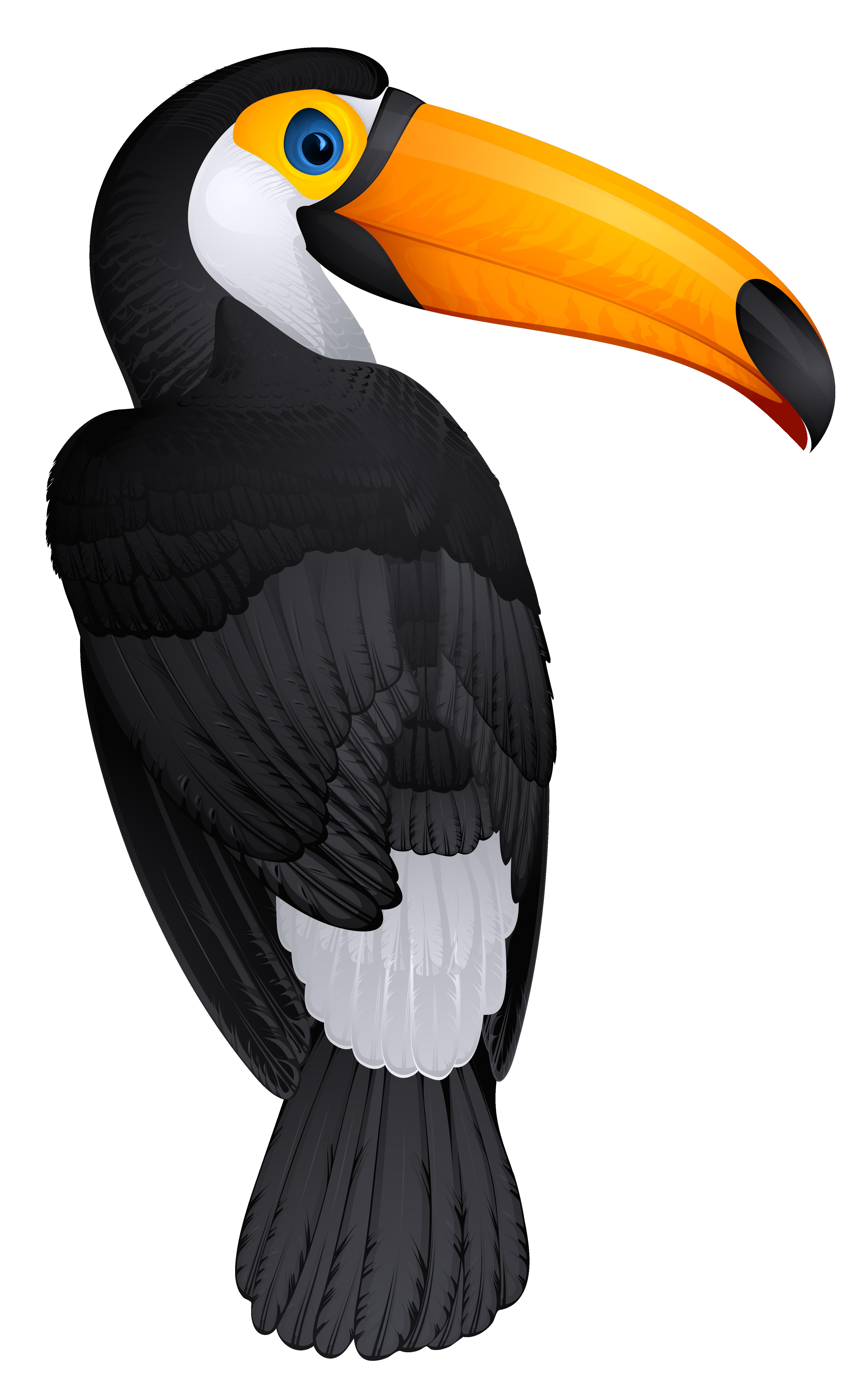 Toucan clipart hornbill #4