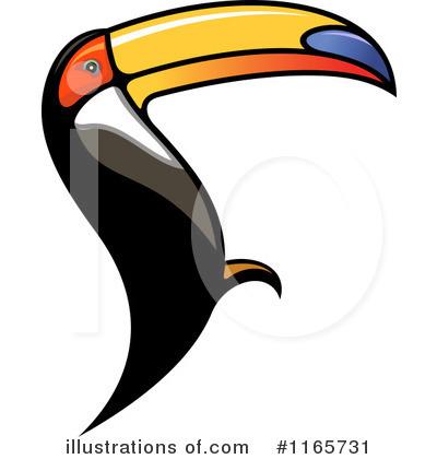 Toucan clipart hornbill #5