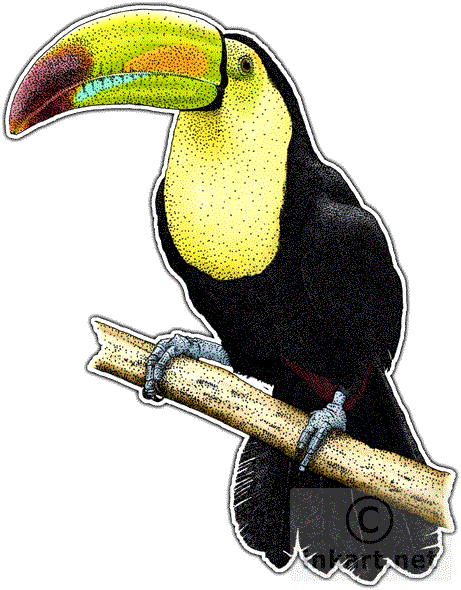 Toucan clipart keel billed #11