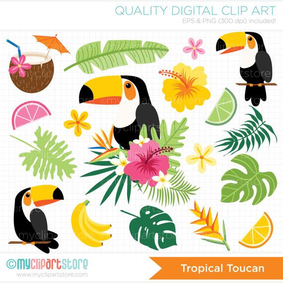 Toucan clipart tropical bird #7