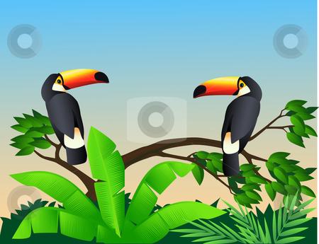 Toucan clipart tropical bird #9