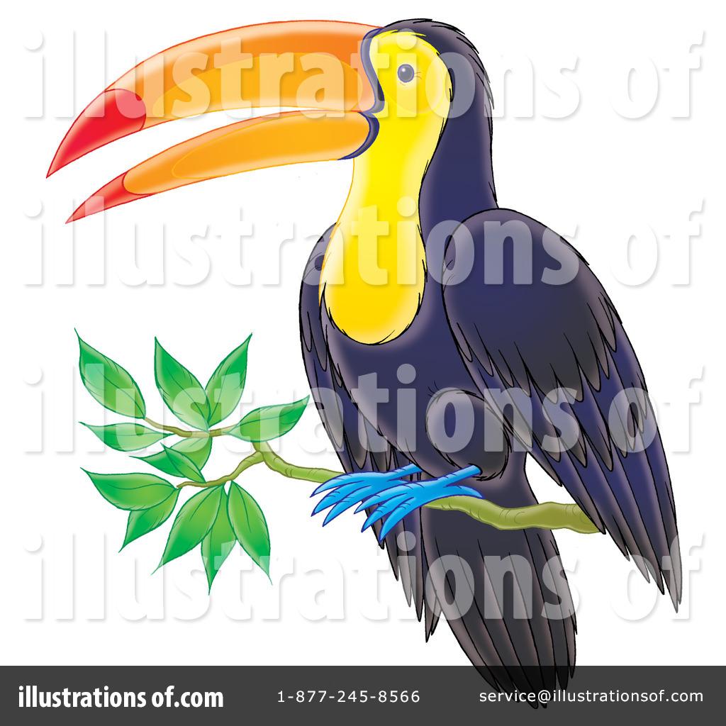 Toucan clipart vertebrate #6