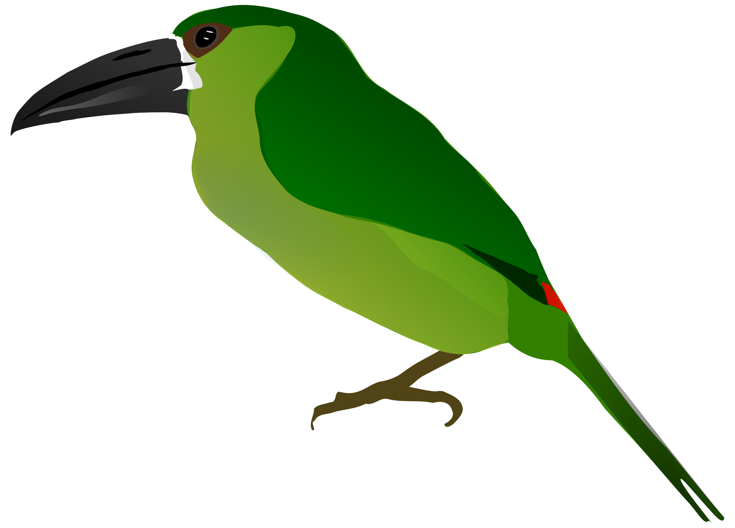 Toucanet clipart Toucanet Crimson Clipart rumped Crimson