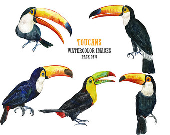 Toucanet clipart #15 Toucanet Toucanet Download Download