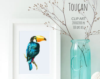 Toucanet clipart real animal #4