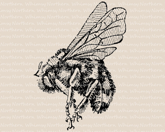 Trap clipart antique animal Art Bee Bumble Illustration Bee