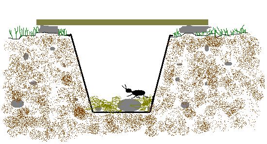 Trap clipart simple Trap Build a  Dig