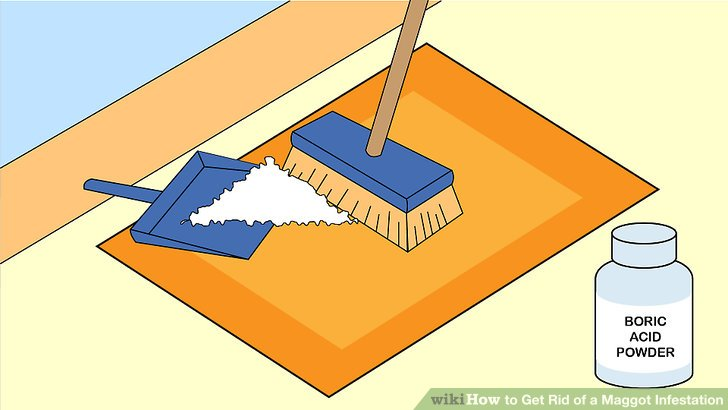 Trapped clipart infested Rid Maggot wikiHow a Ways