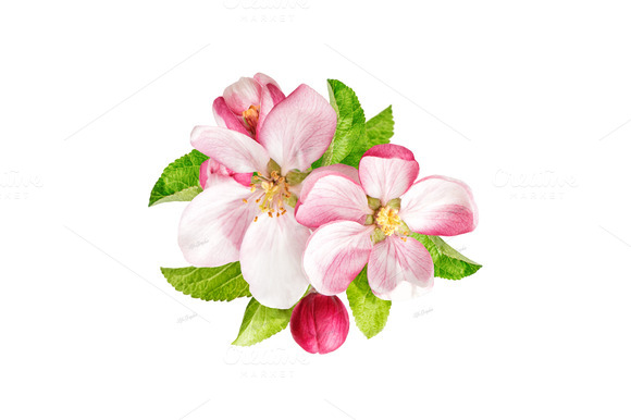 Tree clipart apple blossom #9