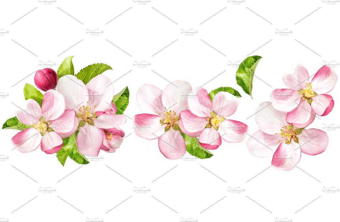 Tree clipart apple blossom #10