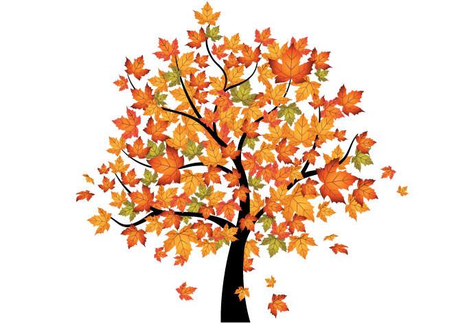 Tree clipart autum #12