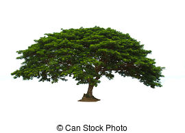 Tree clipart big tree #5
