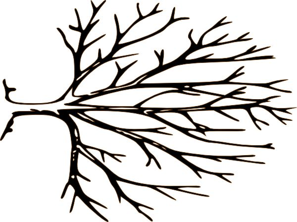 Branch clipart black and white Pinterest White Bare 64 Tree