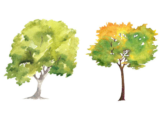Tree clipart high resolution N28 Vector High PNG on