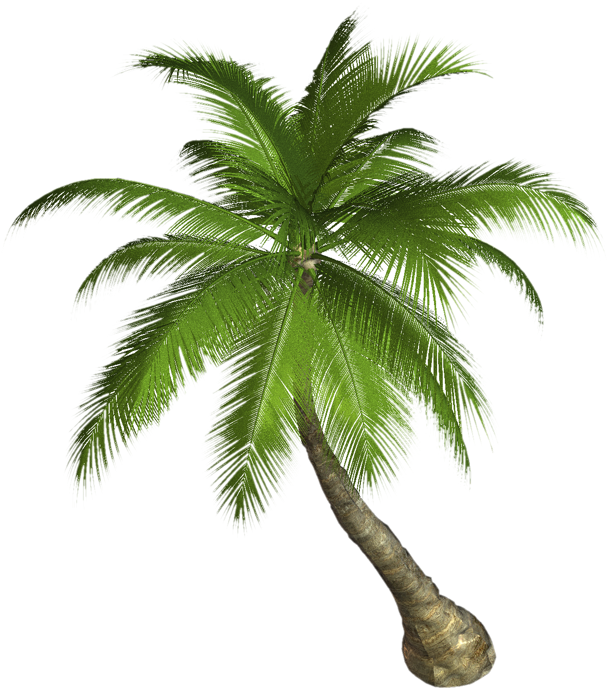 Tree clipart high resolution Tree palm png Download Art