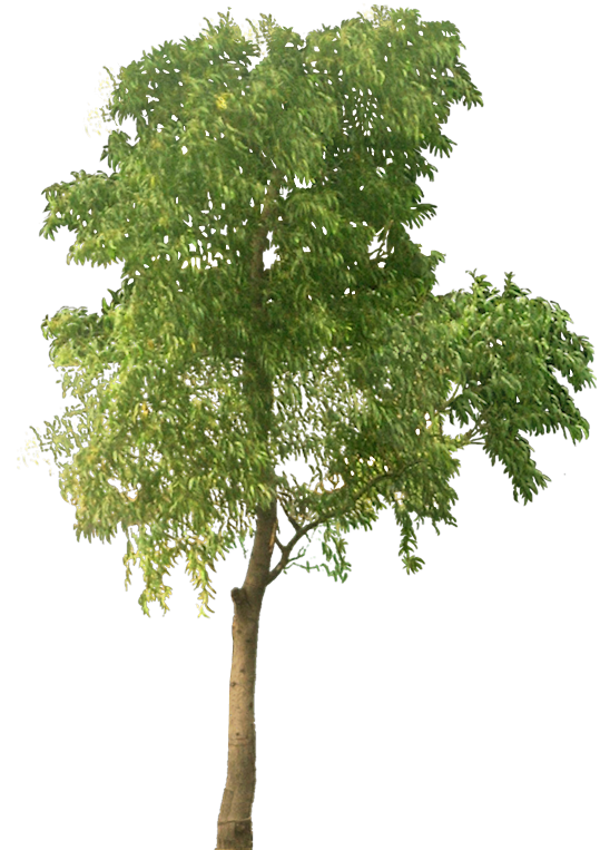 Tree clipart high resolution Tree and art: graphics Free