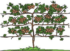 Tree clipart kiwi #8
