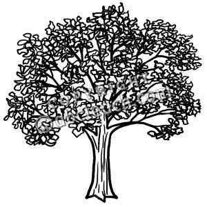 Tree clipart oak tree Tree #24892 Clip oak Oak