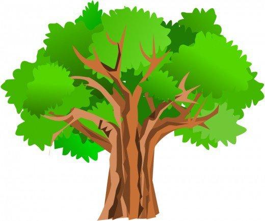 Tree clipart oak tree Collection schliferaward Oak images art