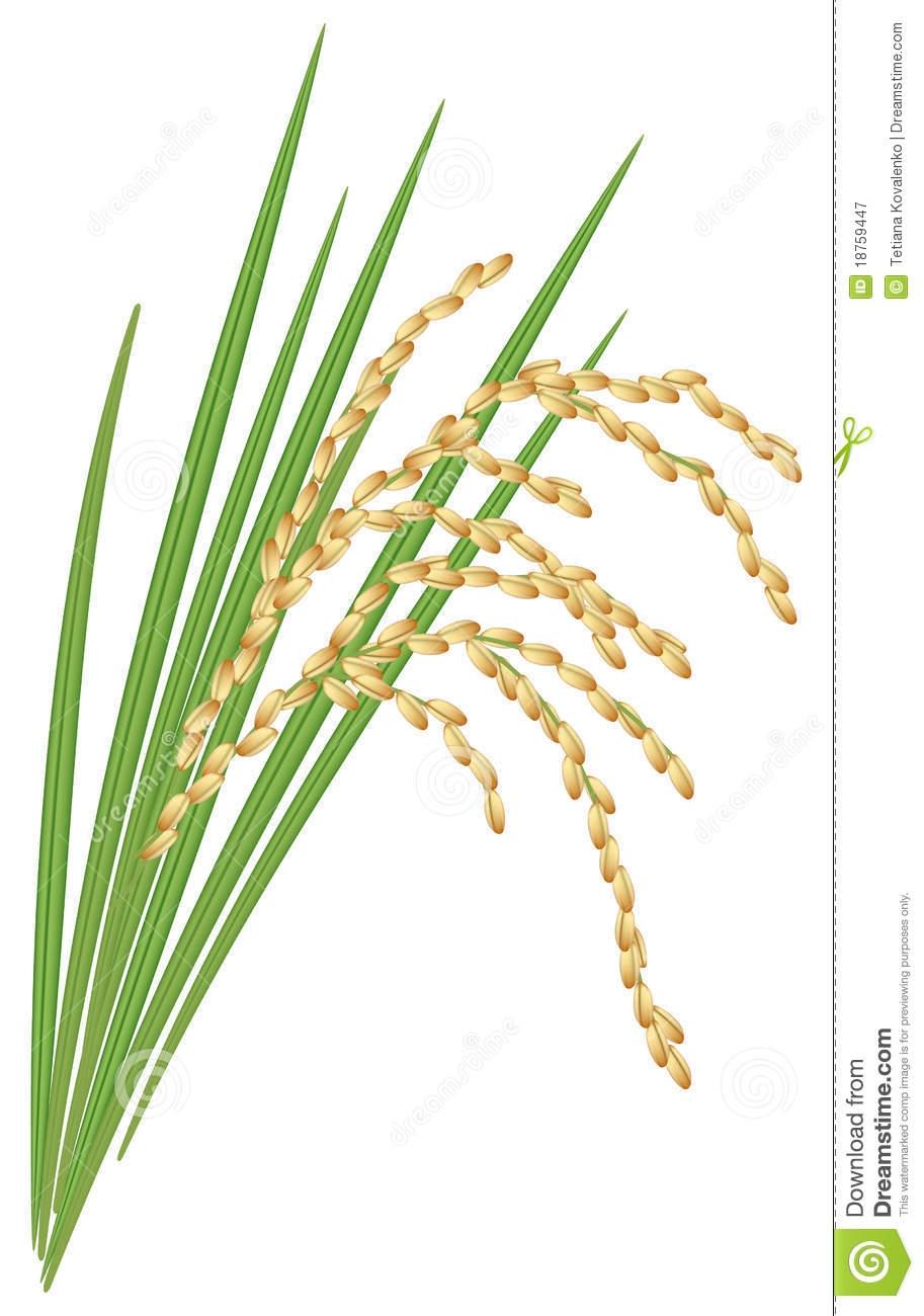 Rice clipart tree Information Art Plant Art Clip
