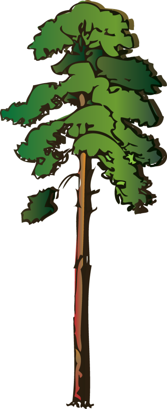Tree clipart tall #13