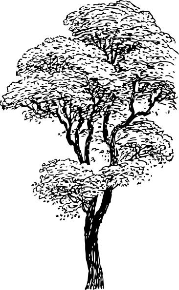 Tree clipart tall #8