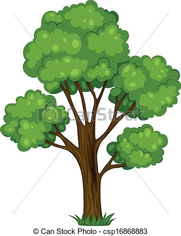 Tree clipart tall #14