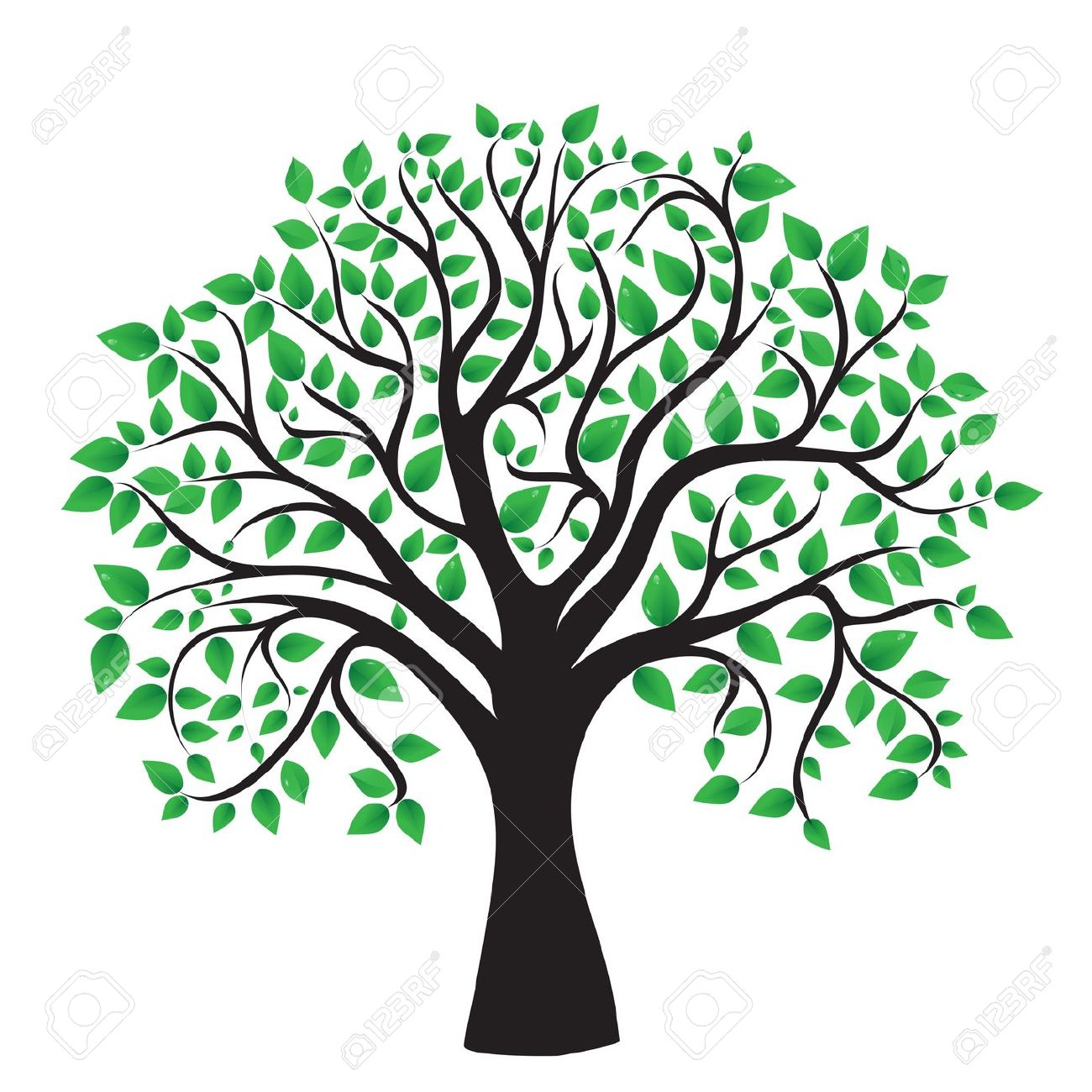 Tree clipart transparent background Collection Evergreen clipart green leaves