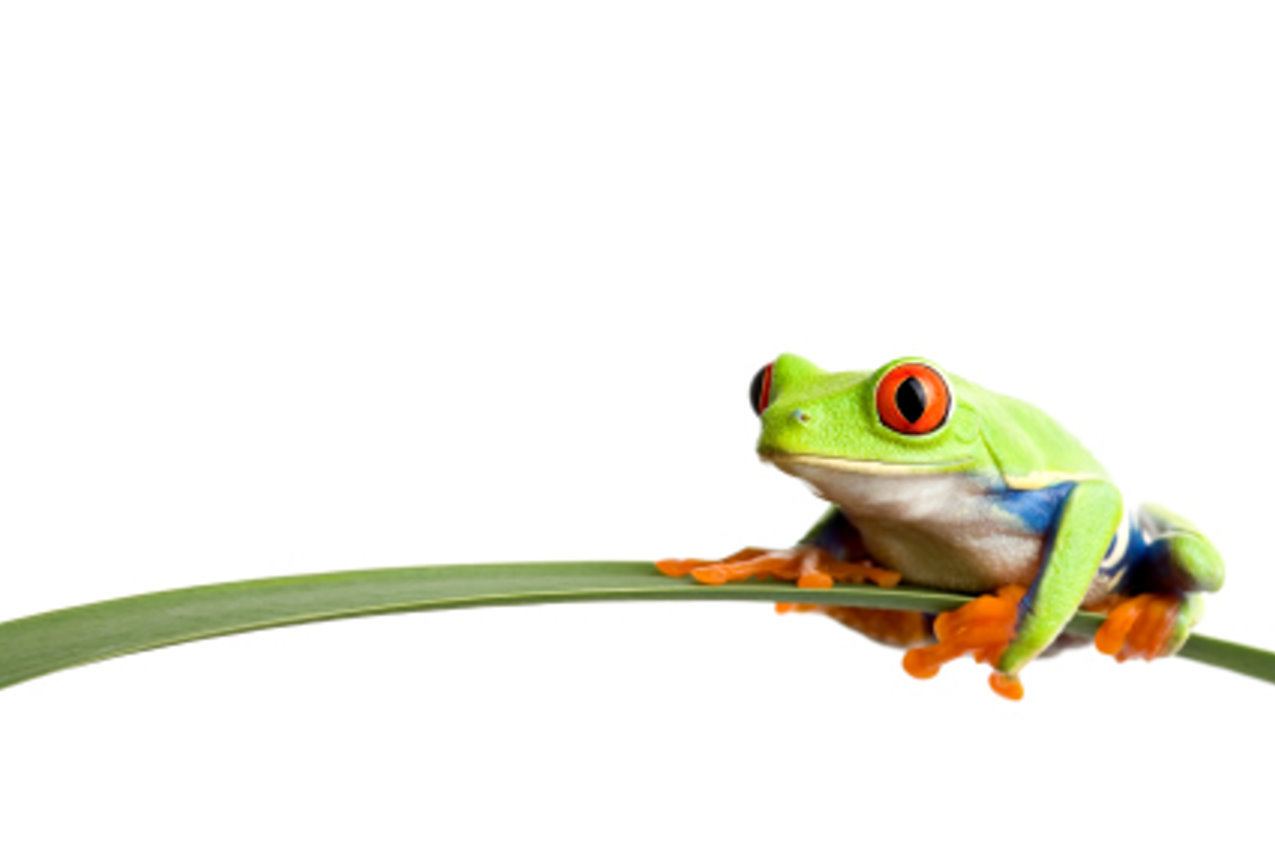Tree Frog clipart Free Eyes Clip Coolred Download