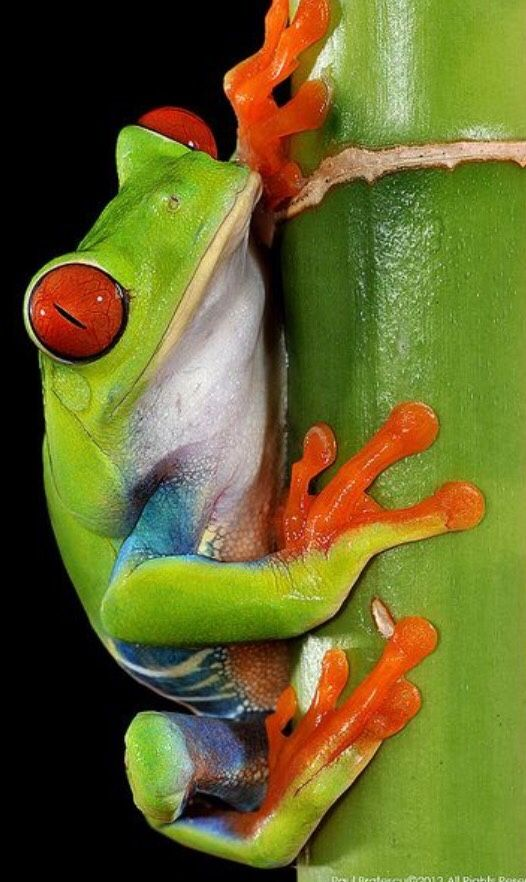 Tree Frog clipart creature #13