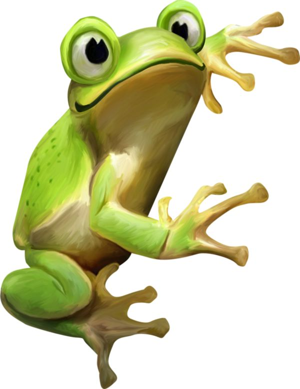 Tree Frog clipart life sciences #6