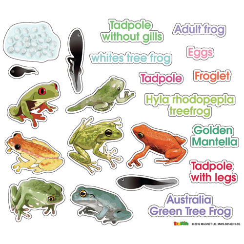 Tree Frog clipart life sciences #13