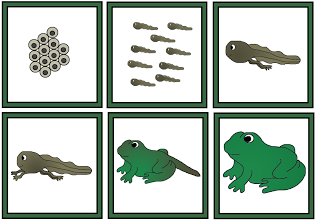 Tree Frog clipart life sciences #15
