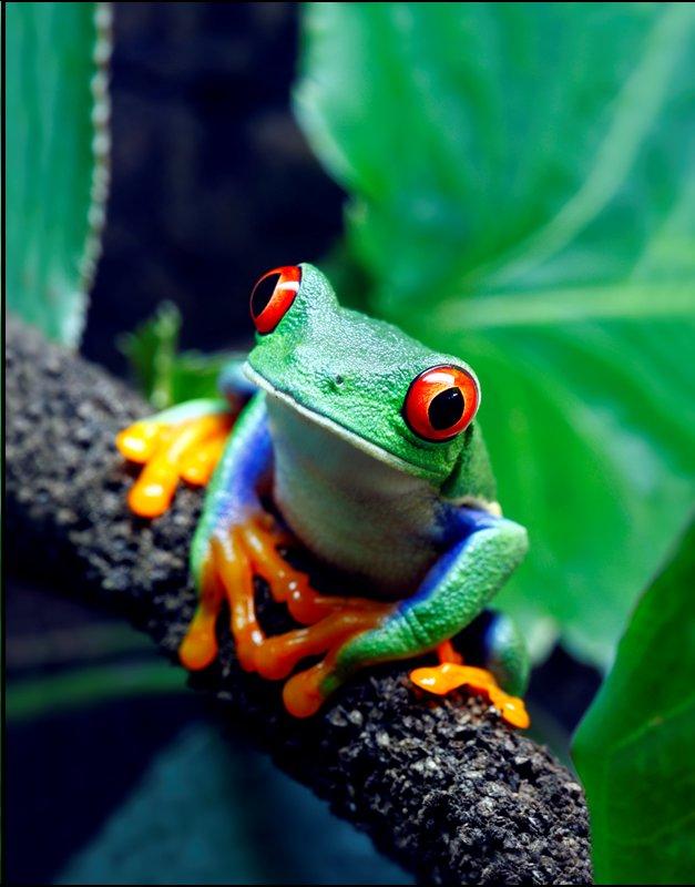 Tree Frog clipart rainforest habitat #5