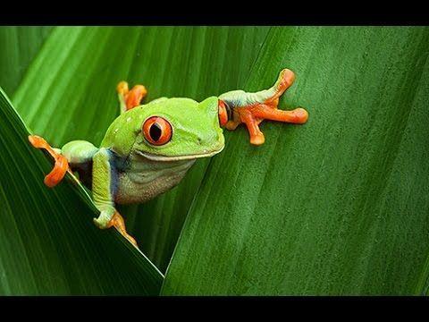 Tree Frog clipart rainforest habitat #11