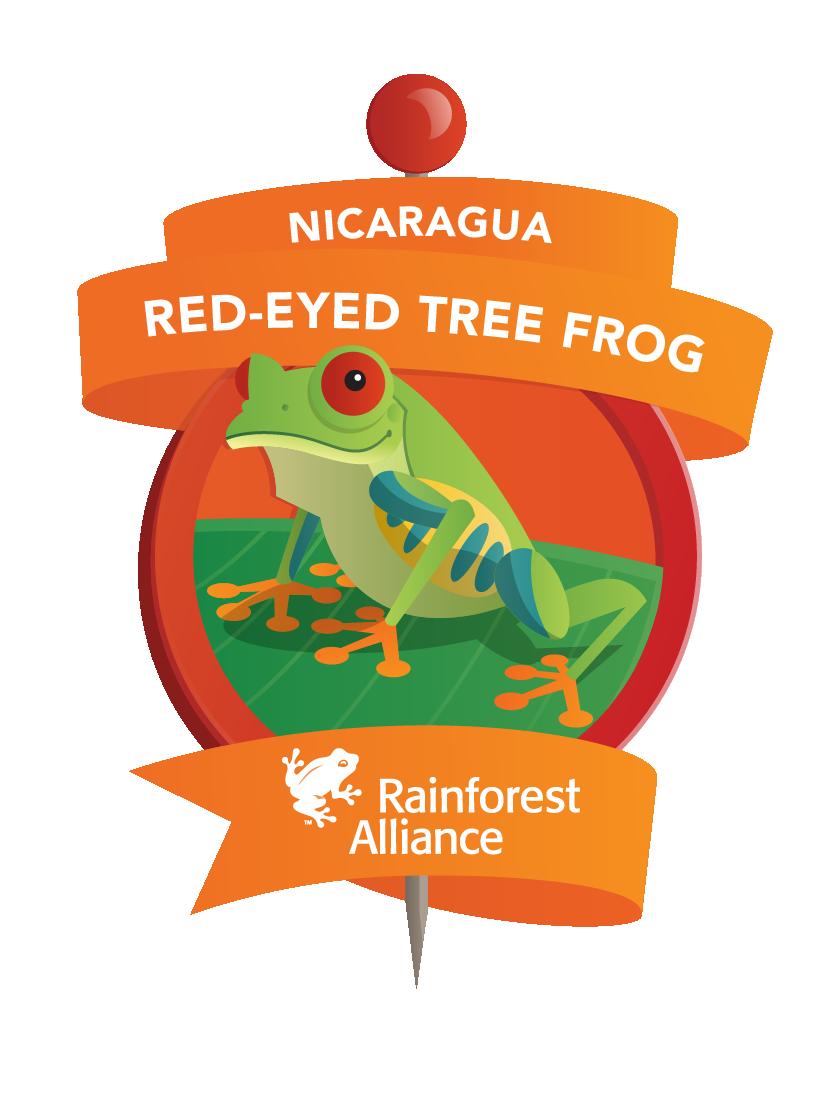 Tree Frog clipart rainforest habitat #12