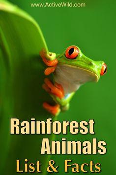 Tree Frog clipart rainforest habitat #8