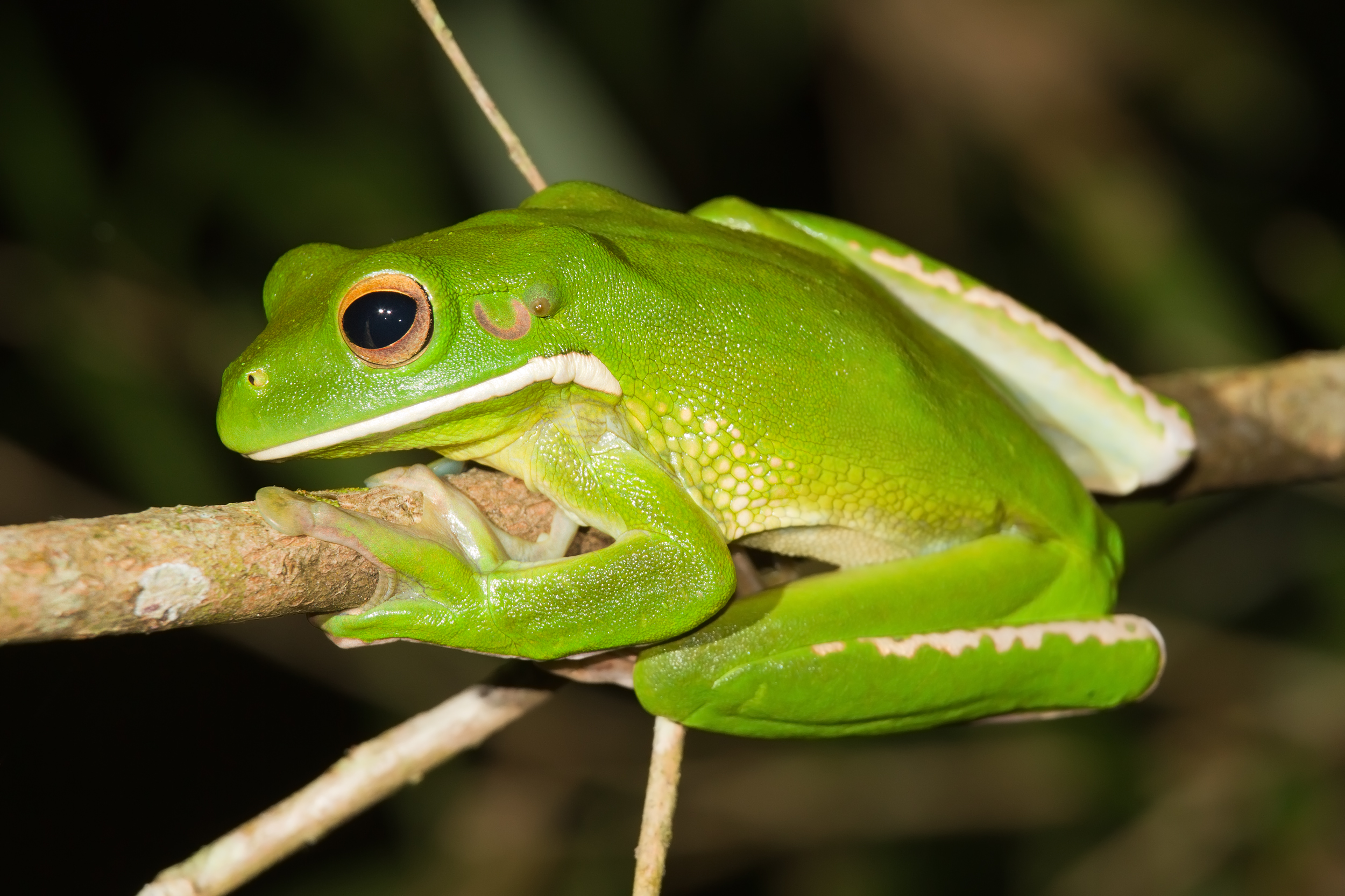 Tree Frog clipart rainforest habitat #7