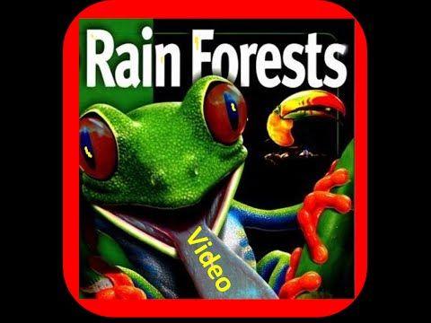 Tree Frog clipart rainforest habitat #14
