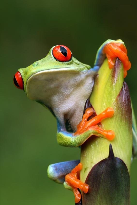 Tree Frog clipart rainforest habitat #6