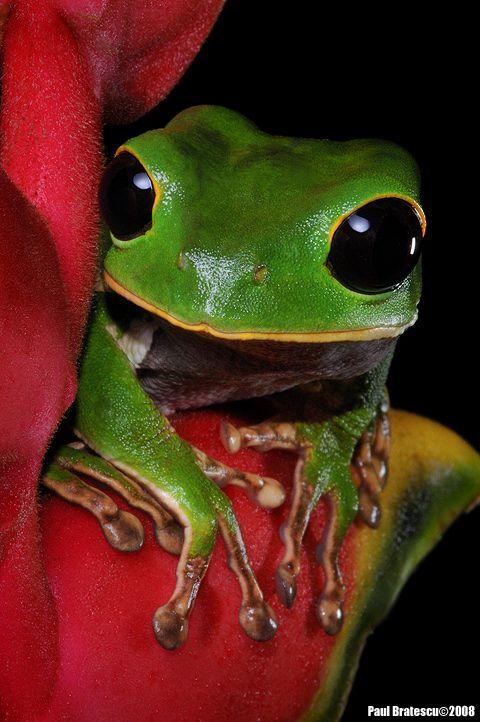 Tree Frog clipart rainforest monkey #5