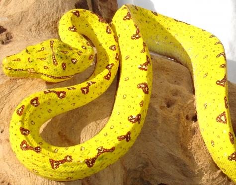 Tree Python clipart african #6