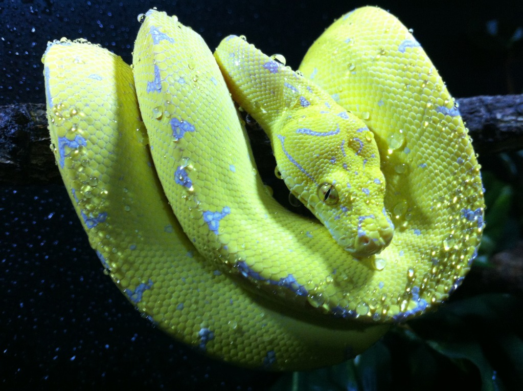 Tree Python clipart rainforest snake #6