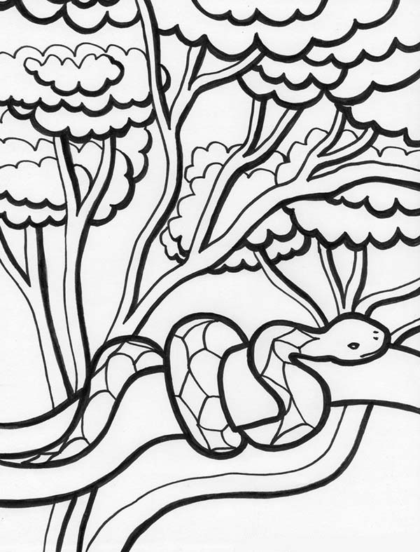 Tree Python clipart rainforest snake #10