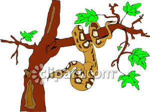 Tree Python clipart rainforest snake #1