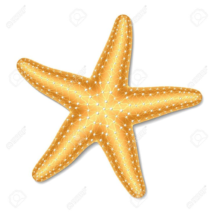 Realistic clipart starfish Best images art Pinterest about