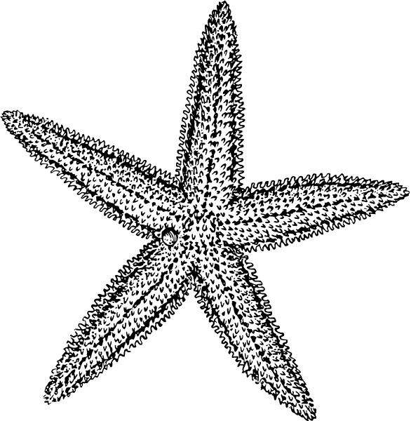 Grey clipart starfish 4  Starfish of Free