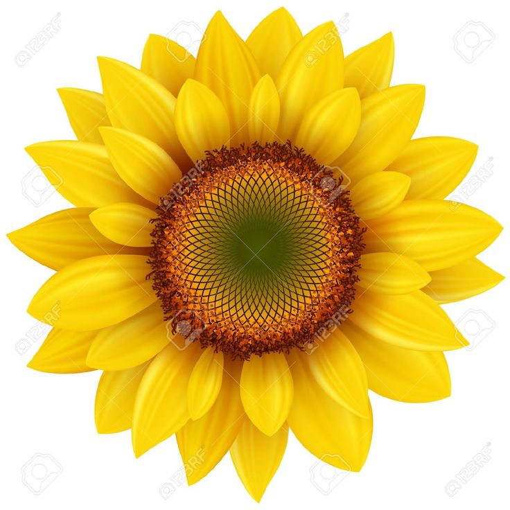 Triipy clipart sunflower Images about Free Illustration Vectors